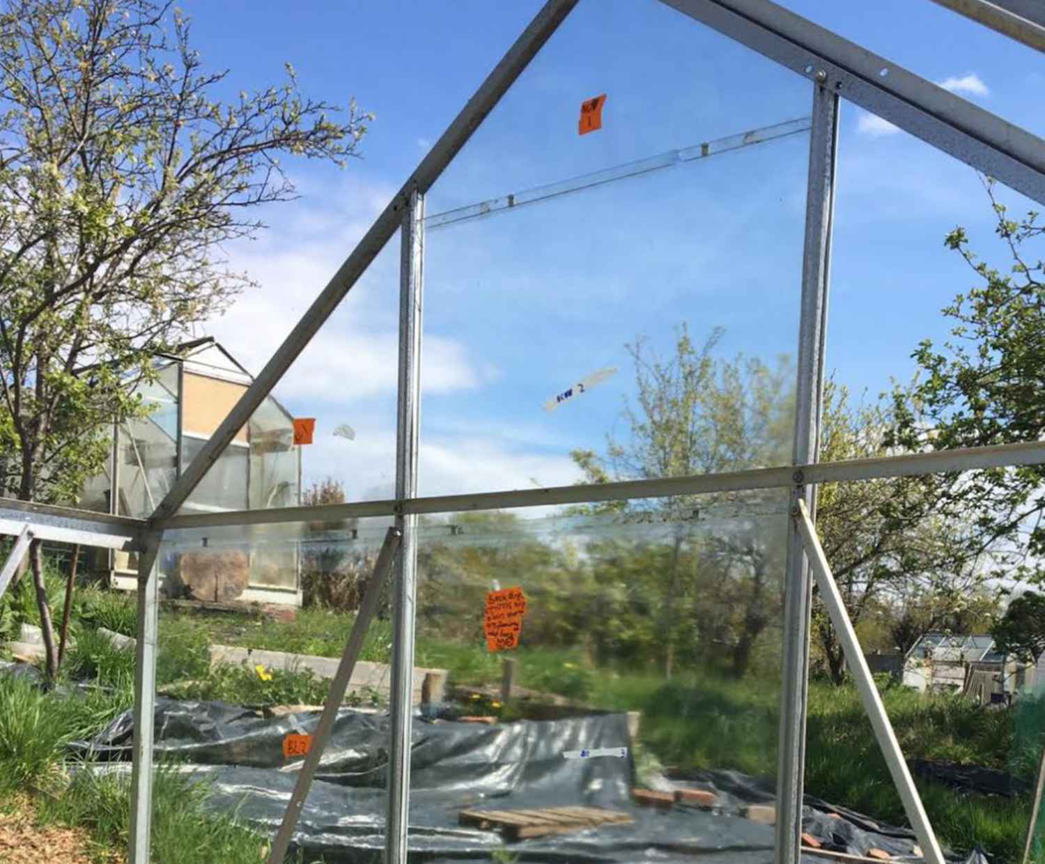 Ancient Champion: There's Glass in the Greenhouse. And Stuff