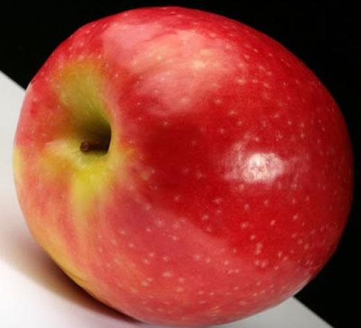 Fruitless.