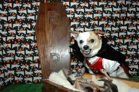 Tricked out animals for Pet Treats Halloween. It's scary out there. So over the next few weeks our haunted maestro Jason is checking out all that is scary in SoCal, beginning with Dogs...