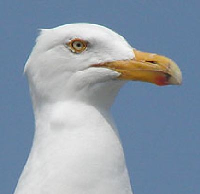 300 Words From London: Is This A Seagull I See Before Me?